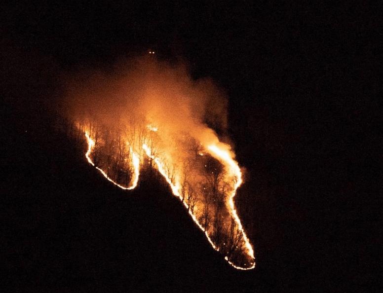 В Сочи загорелась лесная подстилка на площади 500 кв. метров