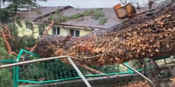 В Сочи 40-метровое дерево упало на жилой дом
