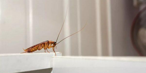 В Роспотребнадзоре предупредили о нашествии тараканов в феврале