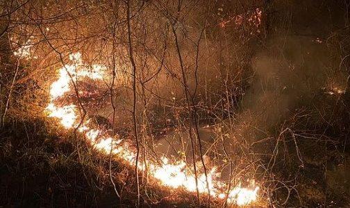Пожарную безопасность в Сочинском нацпарке признали неудовлетворительной