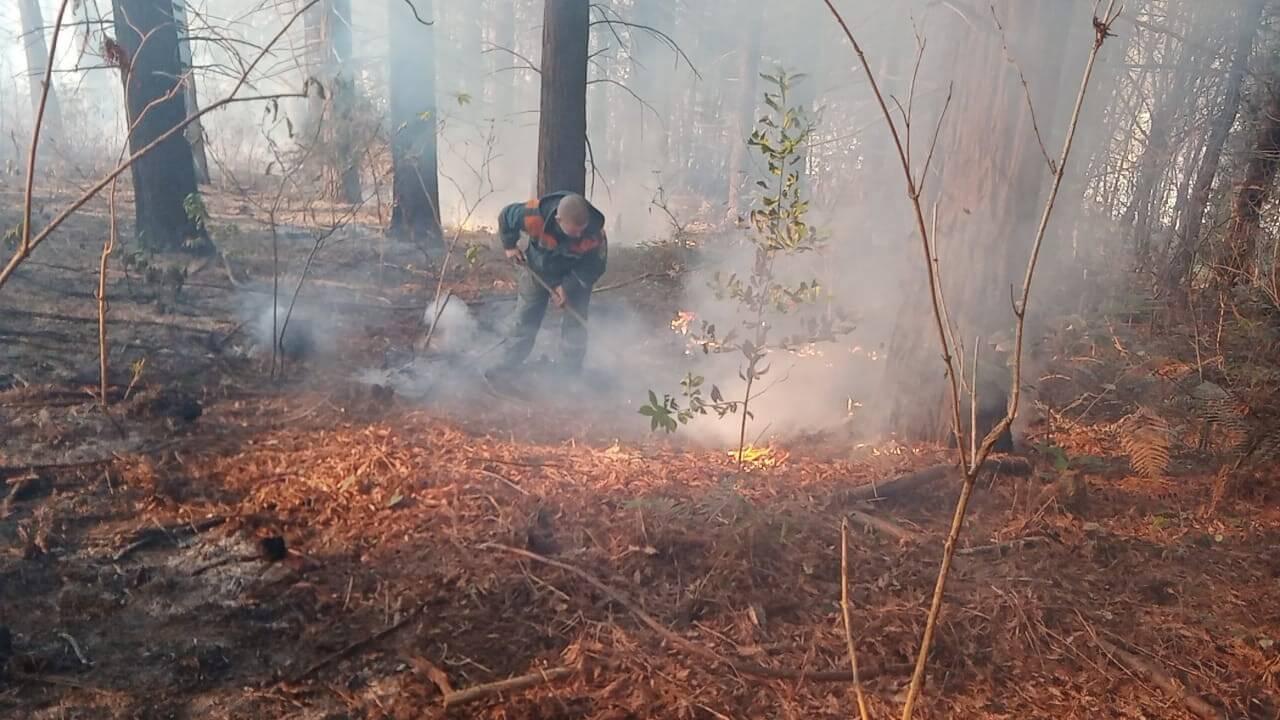 На Кубани шесть лесных пожаров охватили 1 тыс. кв. метров
