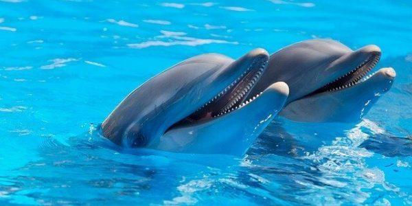 Сочинских дельфинов Рокки и Лану смогут выпустить в море после реабилитации