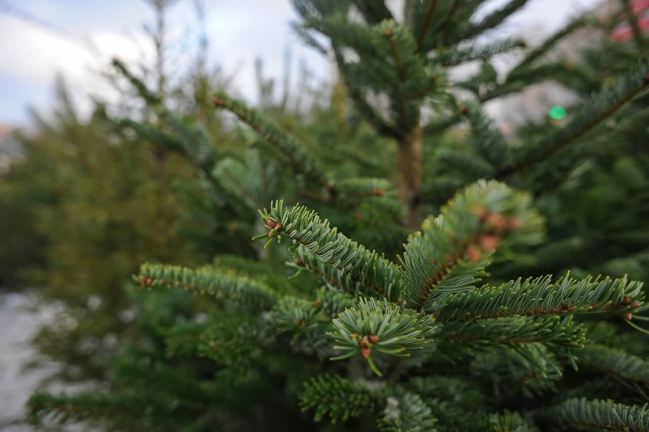 В Краснодаре из выброшенных новогодних елок сделают опилки для садовых дорожек