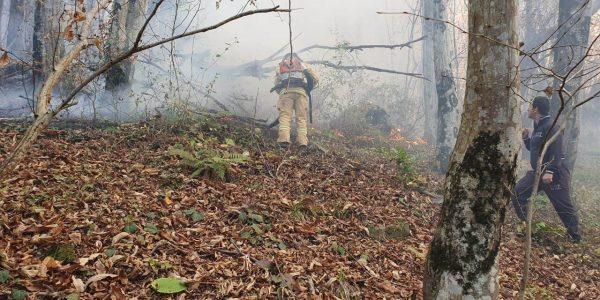 На лесные пожары в Сочи спасатели с вертолета сбросили 108 тонн воды