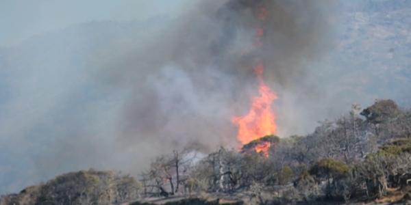 Ущерб от летнего пожара на Утрише оценили в 120 млн рублей