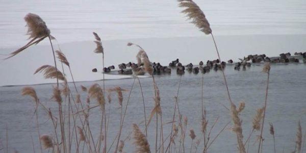 МЧС: просьба к рыбакам — не выходите на слишком тонкий лед, подождите пять дней