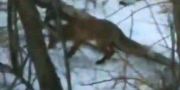 В Новороссийске голодная лиса вышла из леса к людям в поисках еды