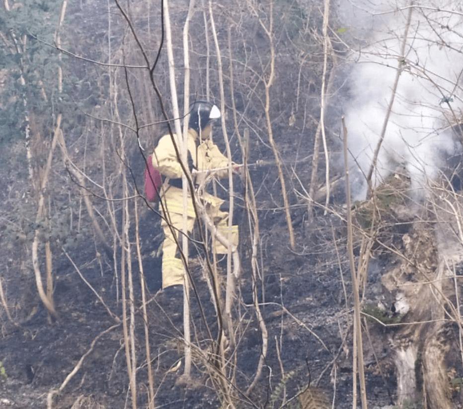 На Кубани лесной пожар охватил 5,5 га