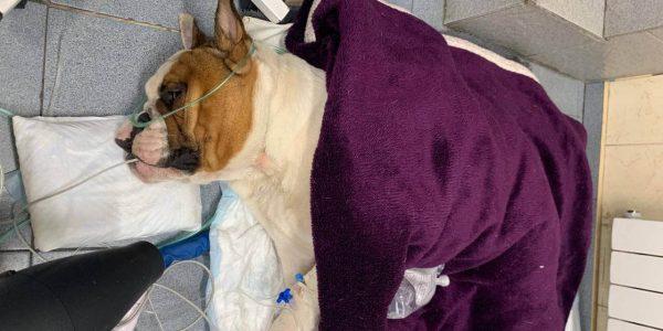 В Краснодаре полиция нашла людей, оставивших умирающую собаку в мусорном баке