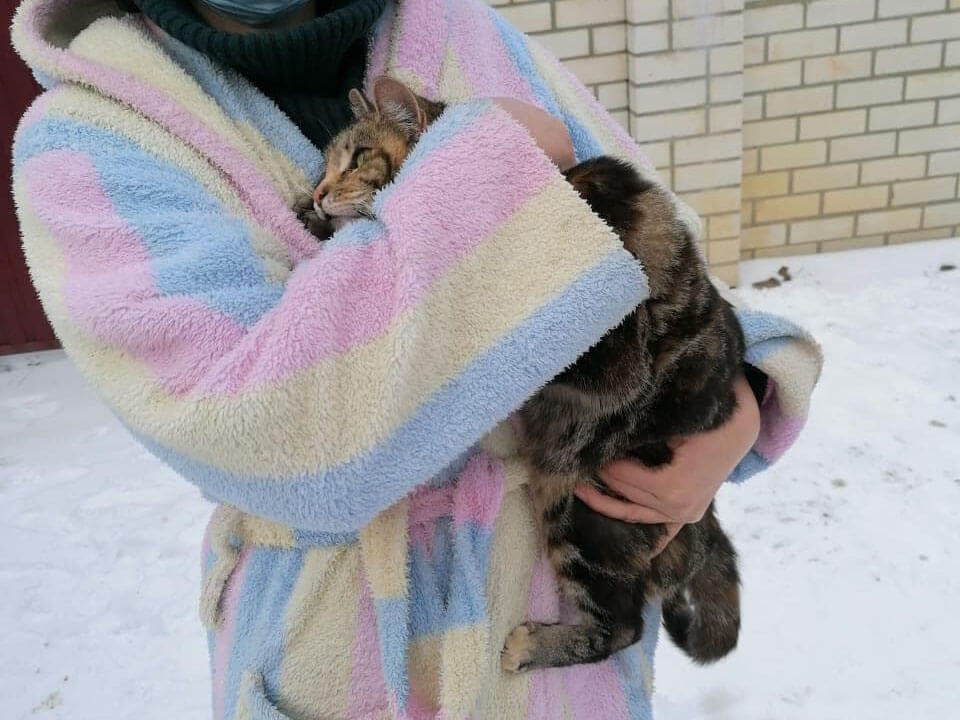 В Новороссийске спасатели сняли кота с электрического столба