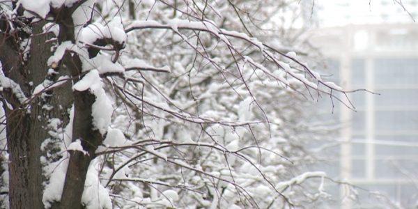 Выпавший на Кубани снег защитит озимые перед крещенскими морозами
