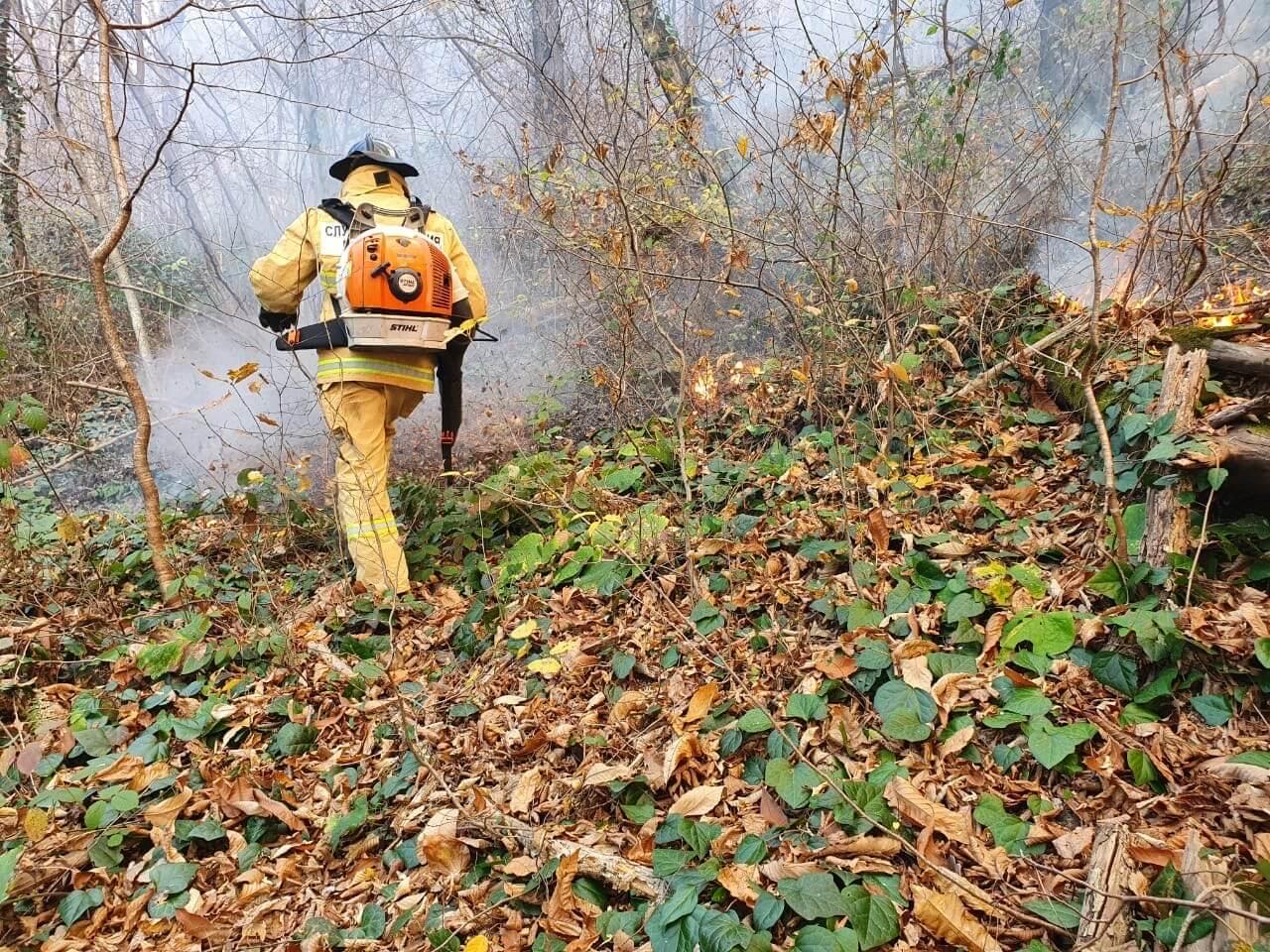 Спасатели потушили лесной пожар в Туапсинском районе
