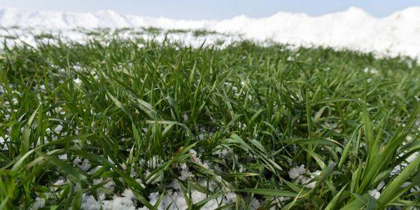 Аграрии Кубани начали подкормку озимых культур на площади свыше 10 тыс. га