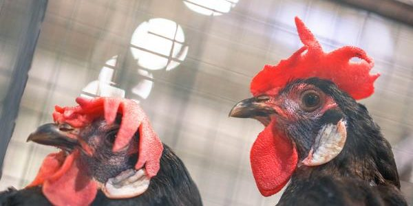 Эксперты рассказали о мерах профилактики при вспышке птичьего гриппа