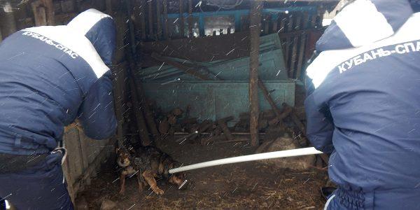 На Кубани агрессивная собака не пускала домой пенсионерку