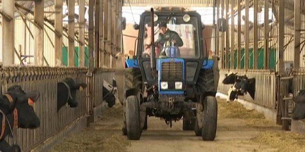 На Кубани 20 февраля отмечают День животновода