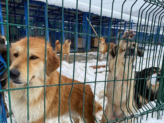 В Туапсинском районе и Сочи планируют построить два приюта для животных