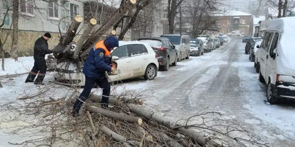 В Новороссийске во время норд-оста дерево рухнуло на иномарку