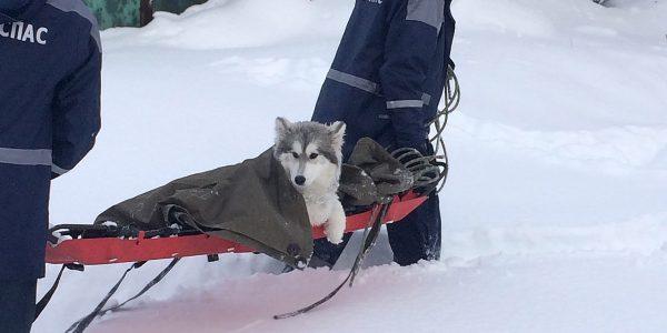 На Кубани спасатели освободили из «снежного плена» травмированную собаку