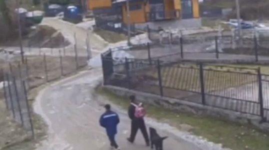 В Сочи полиция проверяет сообщение о «съеденном лабрадоре»