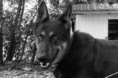 В Сочи в приюте для животных произошел пожар, погибли две собаки