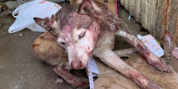 В Белореченске неизвестные избили собаку и выбросили на мусорку, она умерла