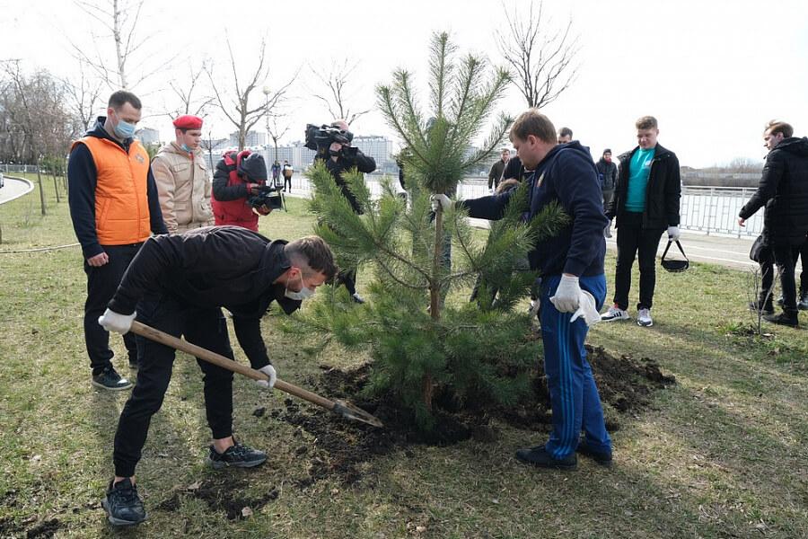 На Кубани рамках акции «Сад памяти» высадили более 23 тыс. саженцев деревьев