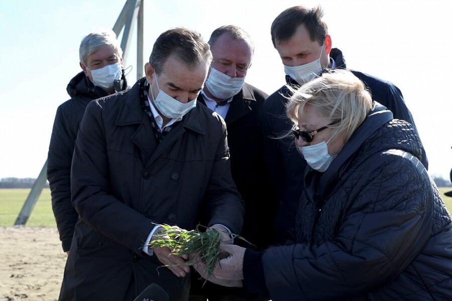 Кондратьев: из бюджета края на агрострахование посевов направят 271 млн рублей