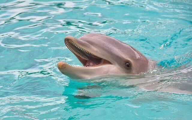 В России хотят запретить вылов дельфинов и тюленей для океанариумов