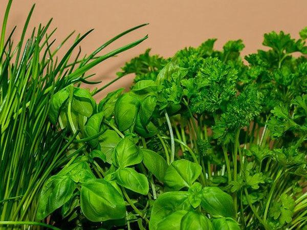 В Роспотребнадзоре рассказали, как избавиться от токсинов в свежей зелени