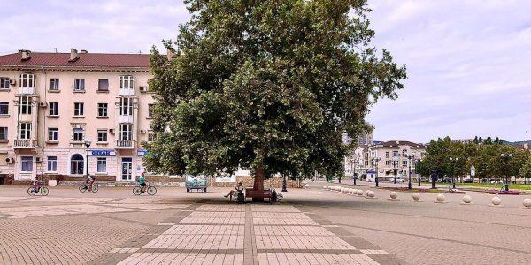 В Новороссийске предложили создать зону отдыха под платаном на Форумной площади