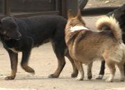 На Кубани участились случаи жёсткого обращения с собаками — «Факты 24»