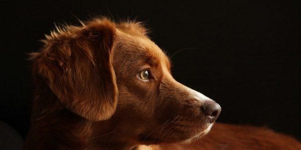 В России создали онлайн-сервис для поиска потерявшихся домашних животных