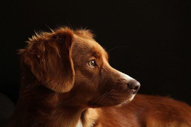 В Новороссийске начнут бесплатно стерилизовать кошек и собак. Но не всех
