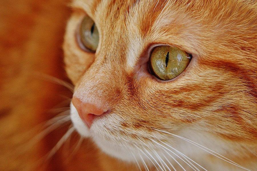 Законопроект о штрафах за выброшенных животных внесен в Госдуму