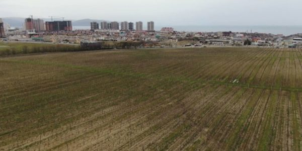На Кубани потенциальные виноградники защитят от застройки