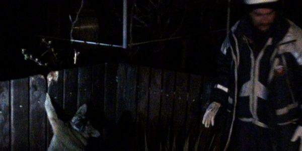 На Кубани собака ночью пыталась перепрыгнуть через забор и застряла между досок