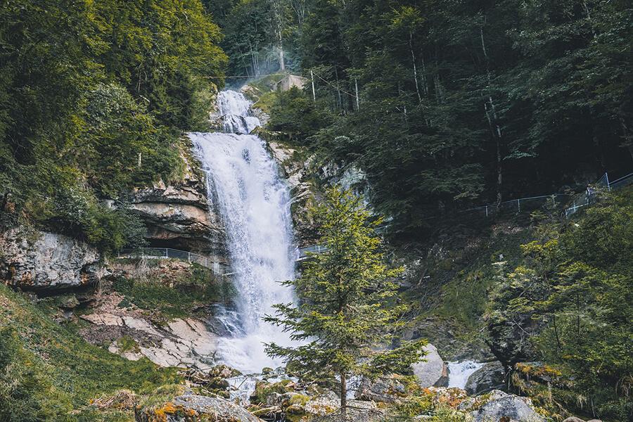 В Краснодарском крае появится «Лесной кодекс»