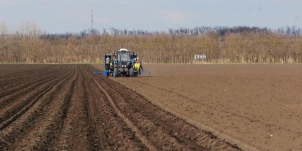 В Кореновском районе 90 га отвели под выращивание картофеля