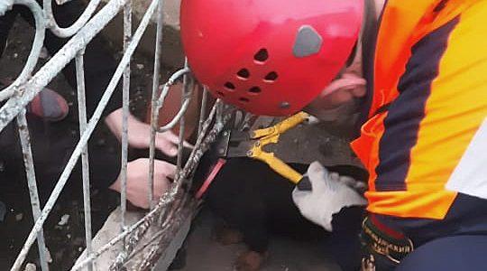 В Лабинске спасатели вытащили из колодца собаку и застрявшего в заборе щенка