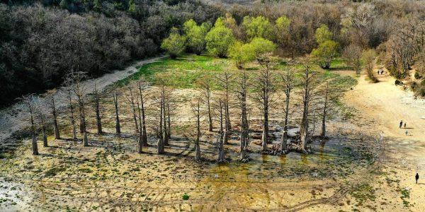 В Анапе кипарисы снова начали зеленеть после засухи