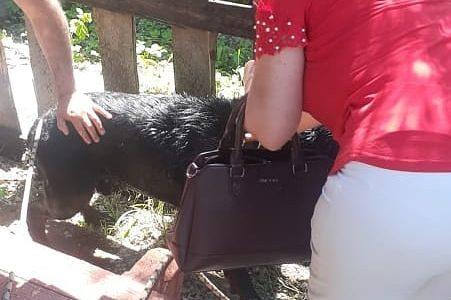 В Новороссийске собака упала в колодец глубиной два метра