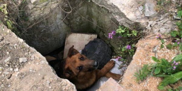 В Новороссийске собака провалилась в бетонную яму и просидела там больше суток