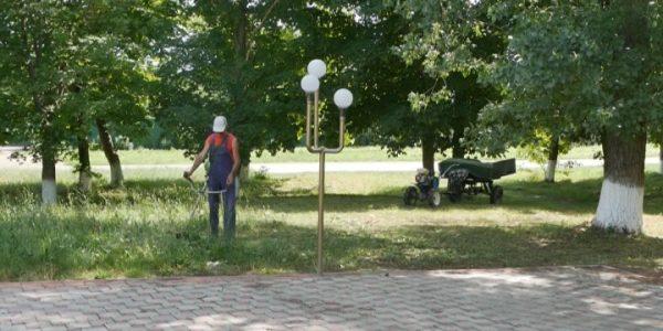 На Кубани началась борьба с амброзией