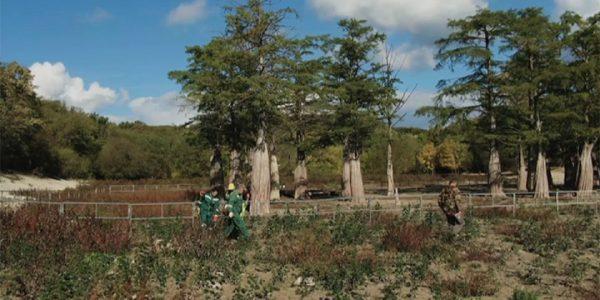 Спасение кипарисов: молодая поросль успешно пережила зиму в анапском питомнике