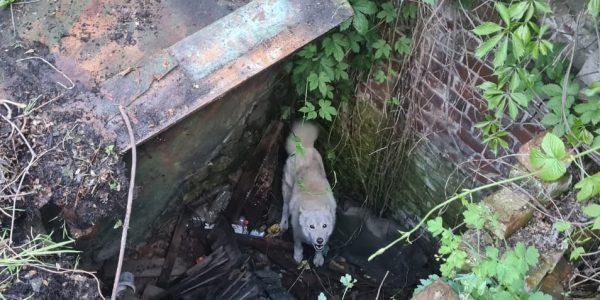 На Кубани собака провалилась в старый колодец и провела там трое суток