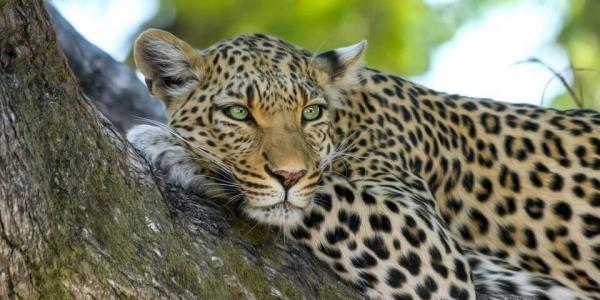 В Новороссийске выдали первую в крае лицензию для зоопарка