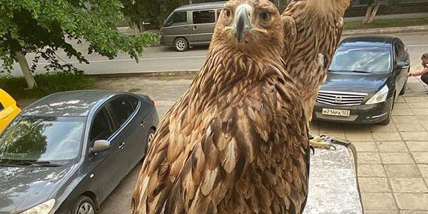 В Анапе полицейские изъяли у уличных фотографов двух краснокнижных птиц