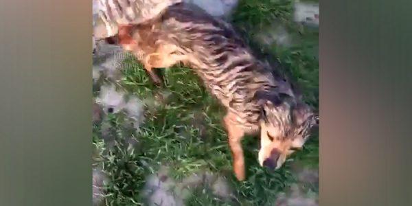 На Кубани рыбаки спасли собаку, брошенную в мешке с камнями на свалке