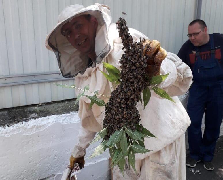 В Новороссийске спасатели вынесли пчелиный улей с территории детсада